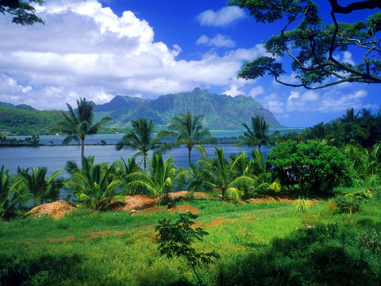 fonds ecran hawaii - Page 2